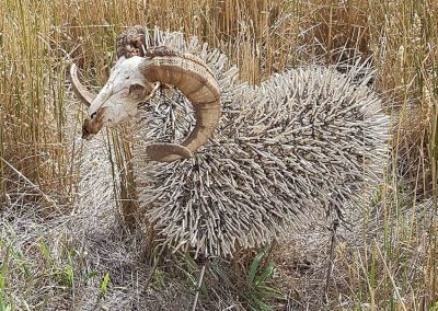sheep-head-up-nature-in-metal-2